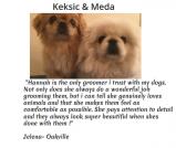 Bronte Harbour Dog Grooming Testimonials