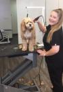 Hannah Walker Bronte Harbour Dog Grooming